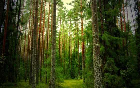 лес, природа, тропинка, full, eli,