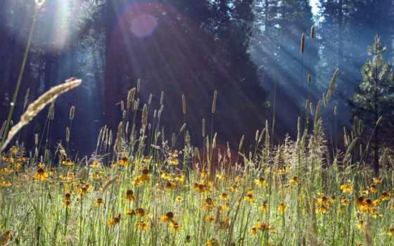 природа, свет, flare, ray, цвета, sun, cvety, поляна, трава