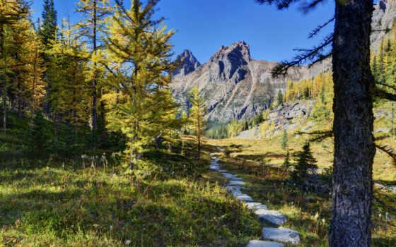 канада, горы, лес