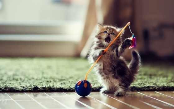 котенок, torode, vilingstore, играет, кошки, zhivotnye, котенка, бена, бен,