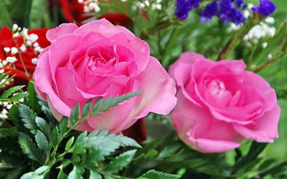 розы, троянди, гипсофил, цветы, букет, роза, монитора,