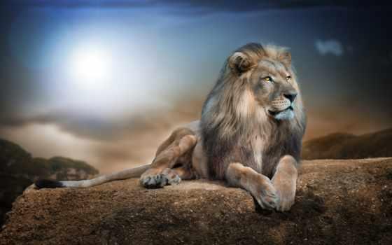 lion, king, зверей, хищник, дешевые, грива, высокого, но, качества, коробки, низким,