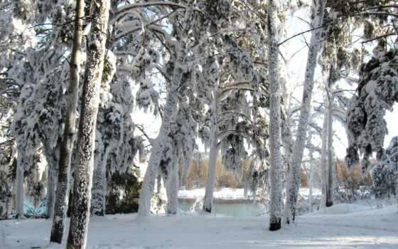 winter, desktop, mobile, снег, free, телефон, best,