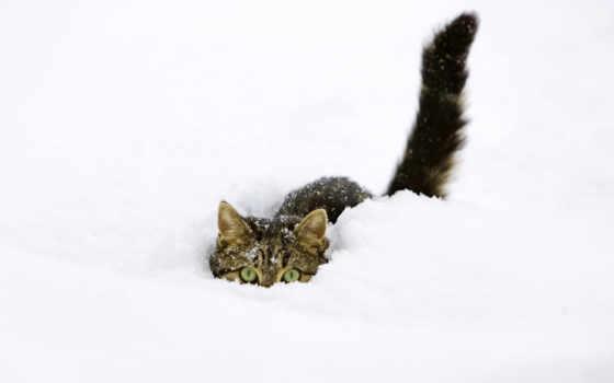 кошки, коты, кот, котята, снегу, снег, winter, zhivotnye, elena, kotova,