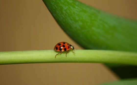 ladybugs, seven,