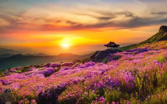 природа, гора, цветы, закат, восход, landscape, mac, macbook, ton, awesome, музыка
