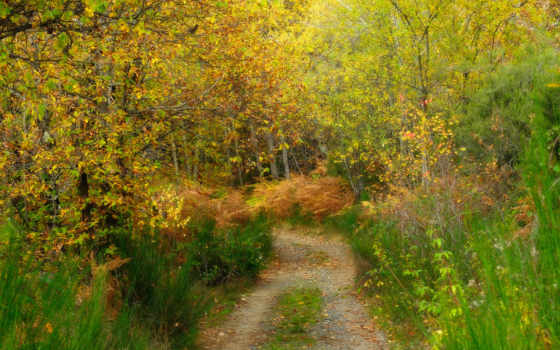 деревя, осень, лес