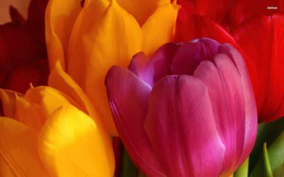 широкоформатные, красивые, тюльпаны, букет, цветы, старину, под, flowers,