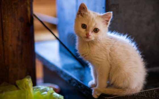кот, cats, eyes, pulpit, котенок, cute, tapety,