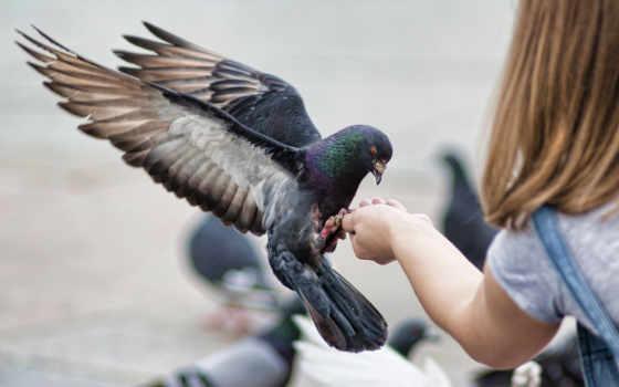 город, человека, sign, руку, голубь, голубей, приметы, народные, садится, голубя,