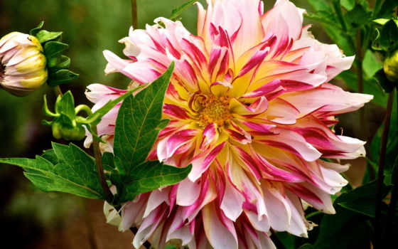 цветы, flowers, desktop, flores, природа, added, have,