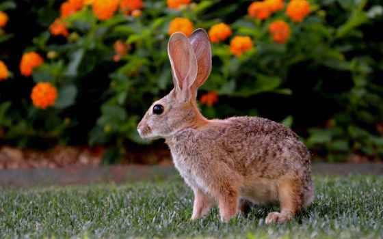 zhivotnye, грызуны, заяц, megapixel, more, зайцы, кролик, поле, zoom,
