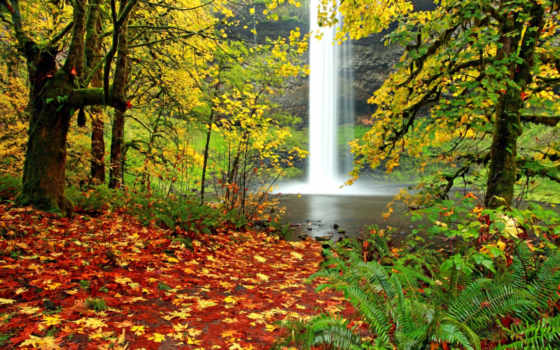 водопад, папоротник