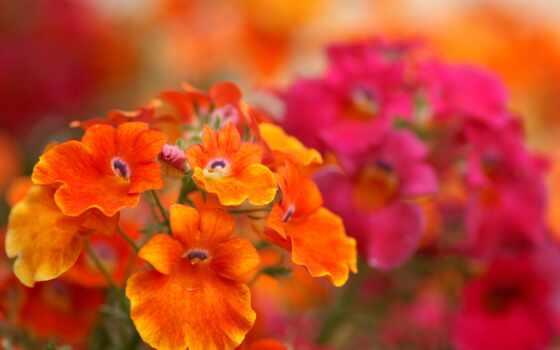 цветы, красивые, flowers Фон № 34876 разрешение 1600x1200