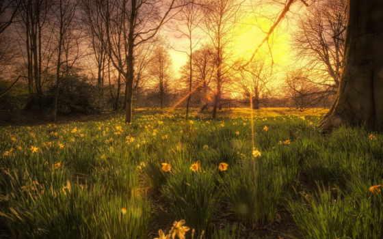 природа, деревья, солнца