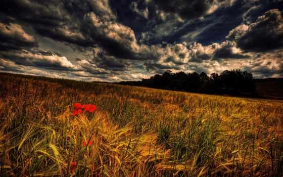 poppies, поле, search, full,