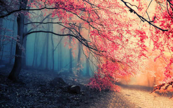 листва, осень, anime, trees, природы, oboi, ветки, tochka, дек,