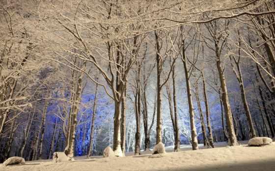 winter, лес, wood, desktop, woods, снег, white, свет,