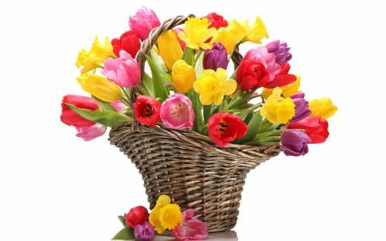 martha, тюльпаны, букет, cvety, желтые, корзина, букеты, 8 марта,