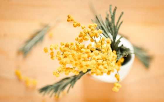 mimosa, мимозы, cvety, вазе, желтая, картинка, букет, branch, размытость, ваза, желтые,