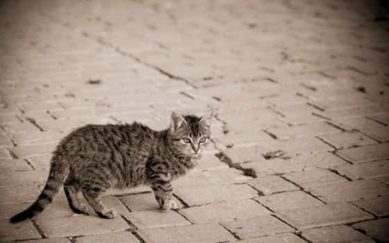кошек, кошки, world, кот, швы, дороги, улица,