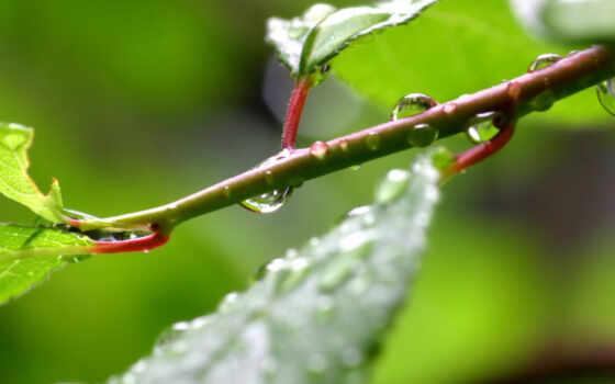 reddishplants