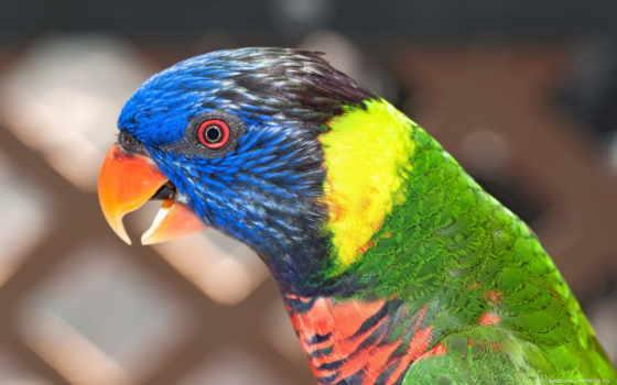 попугай, птица, красивый