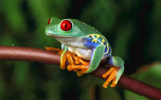 дерево, лягушка, frogs