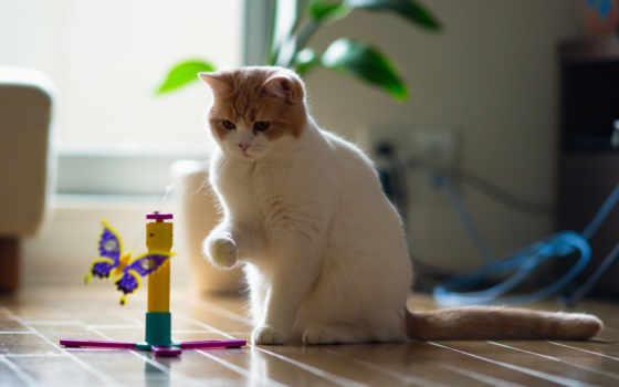 кот, играет, бабочкой, playful, взгляд, toy, кошки,
