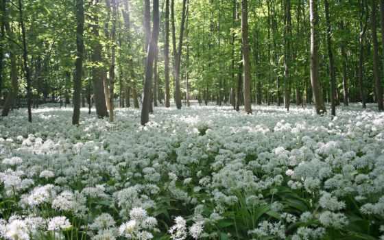 весна, природа, cvety, trees, весенние,