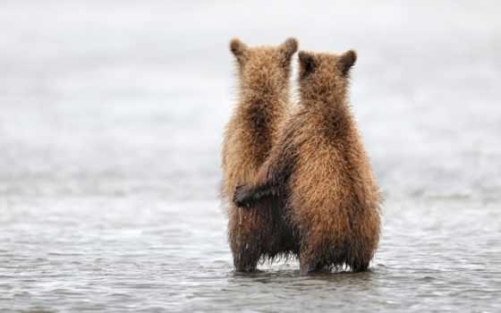 животных, love, zhivotnye, любви, только, чувства, мужчина, that, инстинкты, оказывается,