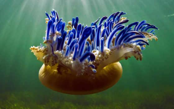 море, jellyfish, рейна, jardines,