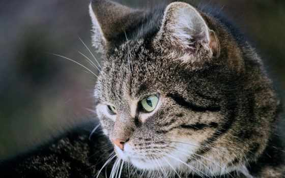 кот, pixabay, kuce, ди