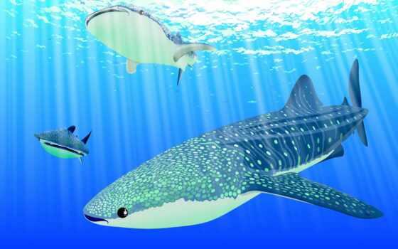 акула, море, blue, choose, deep, тема, стена, baby, вектор, особо, see