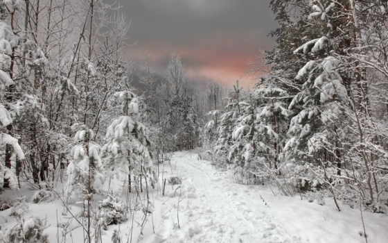 зима, лес Фон № 32047 разрешение 1920x1080