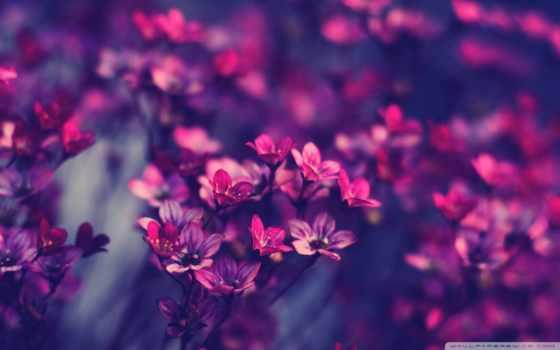 art, цветы, голубые