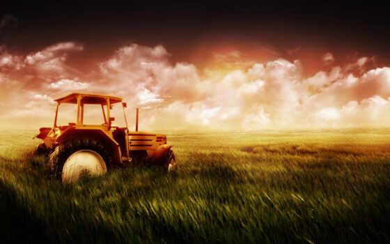 поле, трактор, голова