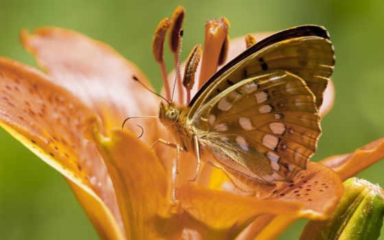 насекомые, анюта, бабочки,