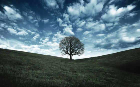 дерево, фон, desktop, дуб, free,