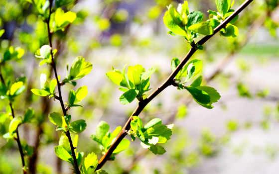 размытость, фон, природа, фото, весна, зелёный, branch, листья, бутон,