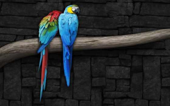 попугай, parrots, branch, live, free, pinterest,