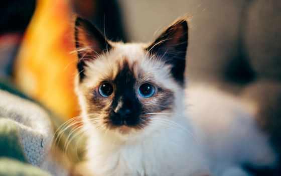 котенок, desktop, cute