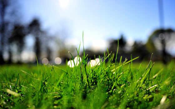 summer, зелёный, трава, газон, макро, огни,