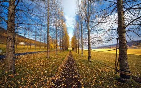 дорога, тропа, веревка, деревья, равнина, трава, листья, картинка, природа,