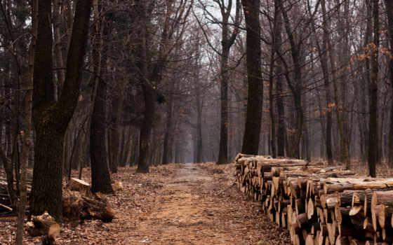 wood, лес, trees, брёвна, дрова, тропинка, листья, природа, logs, landscape,