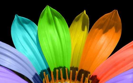 цветы, радужные, цветов