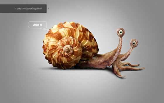snail, design, осьминог, аквариум, картинка, интерьер, water, широкоформатные, осьминог, дизайна,
