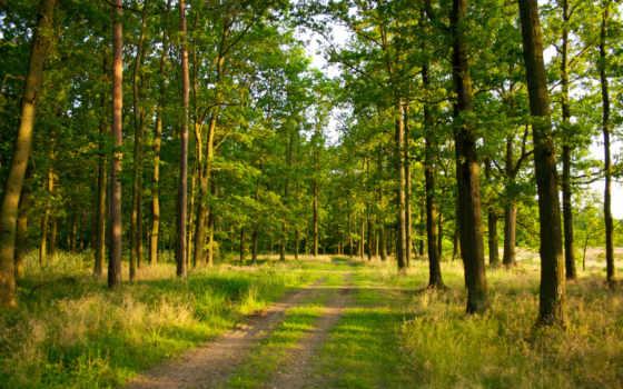 природа, summer, трава, дорога, лес, свет, trees, trail,