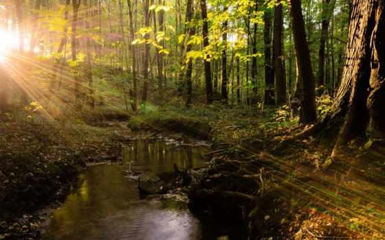 wald, und, sonnenstrahlen, лес, bilder, das, бах, bild,