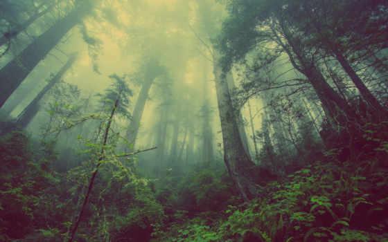 лес,  туман, зелень